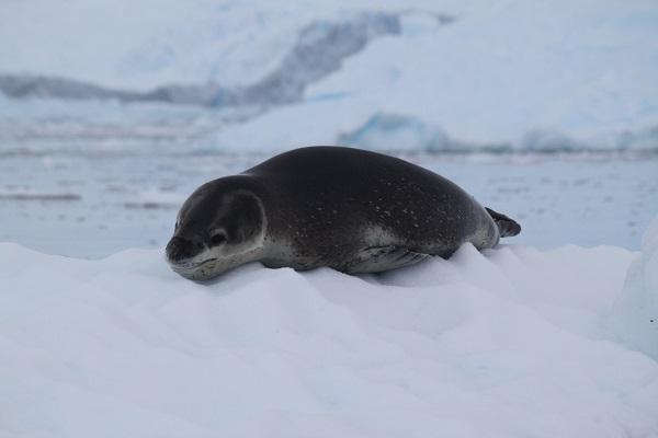 南極旅行のご感想☆彡