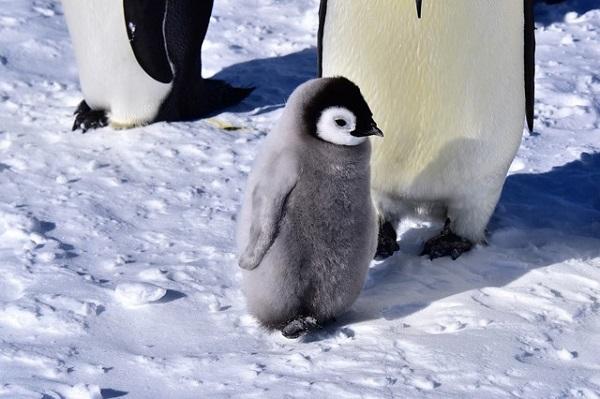 【お客様体験談】皇帝ペンギンとの出会いの旅