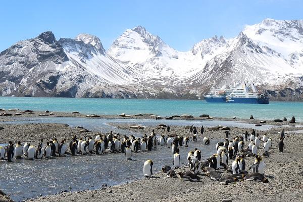 キングペンギン/サウスジョージア島