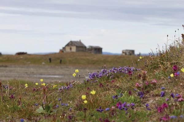 ロシア北極地域の世界遺産ウランゲリ島