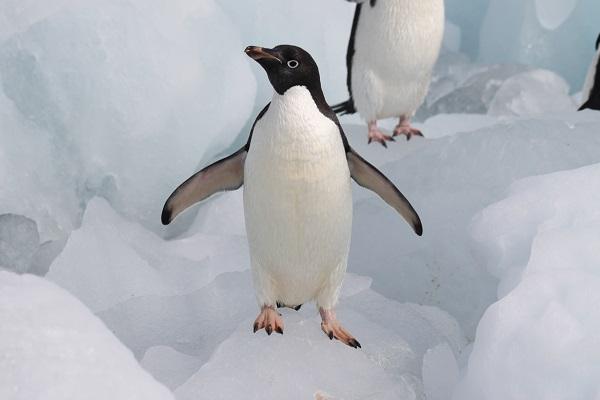 第17回南極&北極の魅力講演会
