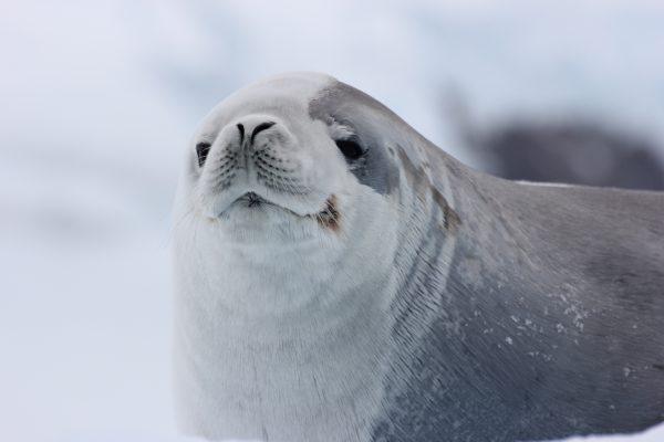 心に残る南極旅行【お客様体験談】