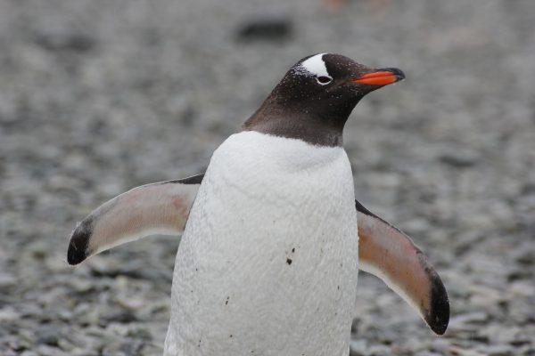 南極の海へダイブ【お客様体験談】