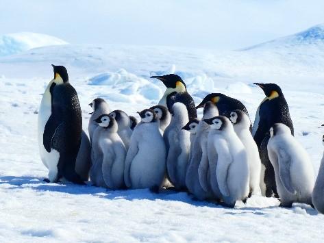 【スタッフレポート】スノーヒル島コウテイペンギン・エクスペディション
