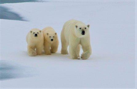 西グリーンランドと伝説の北西航...